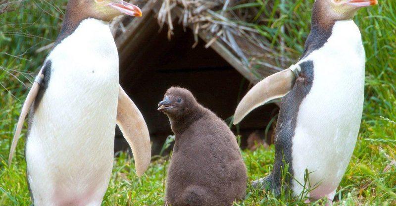 Weird New Zealand Animals 9