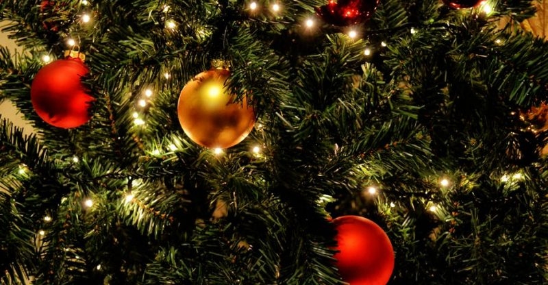 the origins of your christmas tree and how they grow - The Origin Of The Christmas Tree